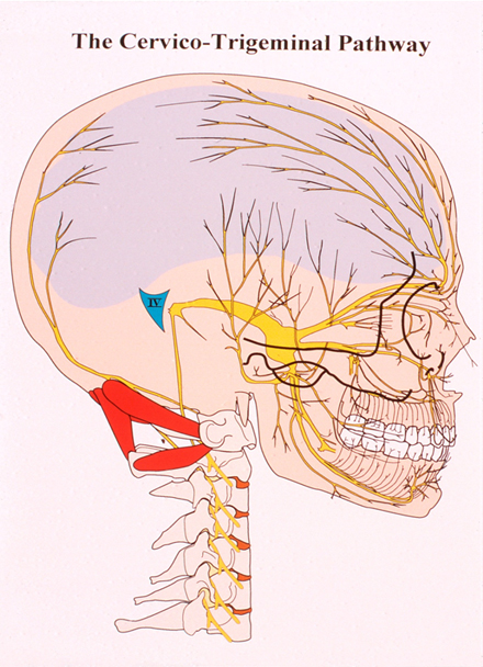The Cervico-Trigeminal Pathway
